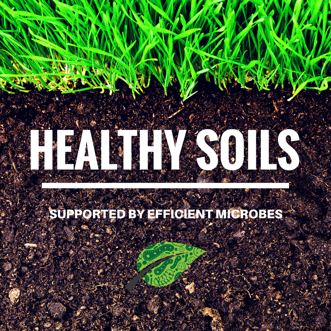Unlock the potential of soil efficient microbes pro soil for Is soil living