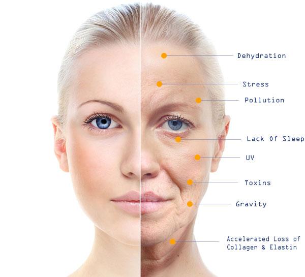 Αποτέλεσμα εικόνας για probiotics skin